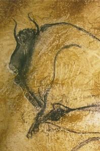 Bison, Chauvet Cave